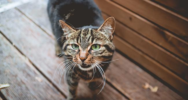 猫 の 避妊 手術 いくら